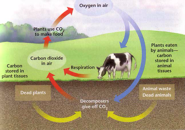 The carbon oxygen nitrogen and water cycles the arctic the carbon cycle ccuart
